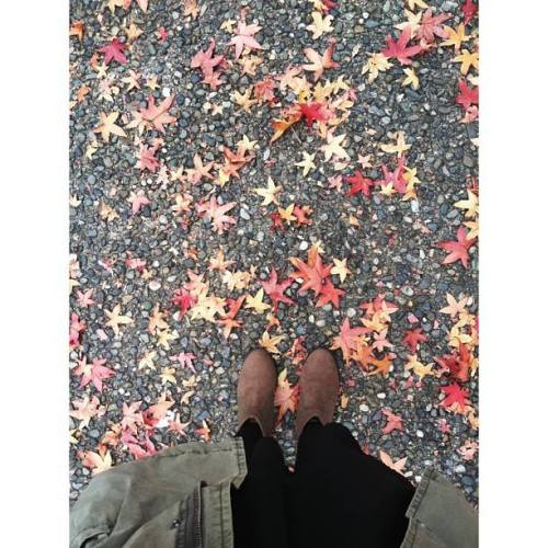 autumn, fall, leaves, jess hunter @jesshunterphoto on instagram